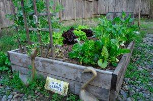 Garden March 2013 004