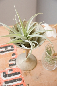 I found this cool looking metal goblet which fits this air plant perfectly