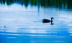 Letts Lake October 2014 060