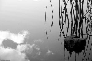 Letts Lake October 2014 098